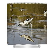 The Avocets  Shower Curtain