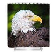 The Bald Eagle Shower Curtain