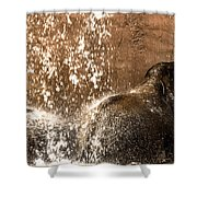 The Bath Day Shower Curtain