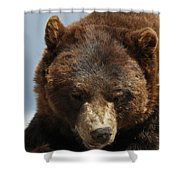 The Bear 2 Shower Curtain