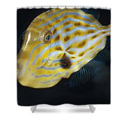 The Beautiful Iridescent Stripes Shower Curtain