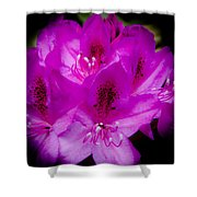 The Beautiful Rhododendron Shower Curtain