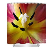 The Beauty From Inside Square Format Shower Curtain