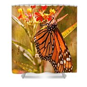 The Beauty Of A Butterfly Shower Curtain