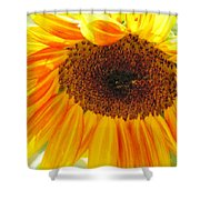 The Beauty Of A Sunflower Shower Curtain