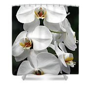 The Beauty Of Orchids  Shower Curtain