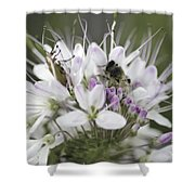 The Beetle And The Bee Shower Curtain