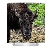 The Bison Stare Shower Curtain