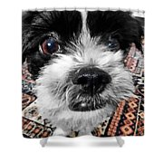 The Black And White Dog Shower Curtain