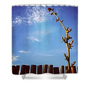 The Blueberry Bush  Shower Curtain by Katie Cupcakes