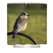 The Bluebird Of Happiness Shower Curtain