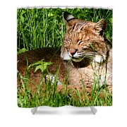 The Bobcat's Afternoon Nap Shower Curtain