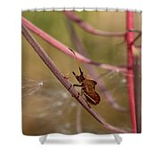 The Bug With Fireweed Seeds Shower Curtain