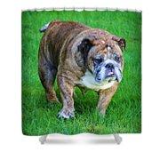 The Bulldog Shuffle Shower Curtain