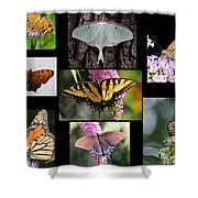 The Butterfly Collection Shower Curtain