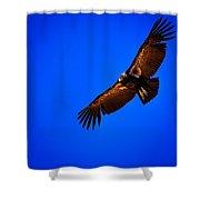 The California Condor Shower Curtain