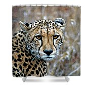 The Cheetah Stare Shower Curtain