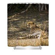 The Cheetah Wakes Up Shower Curtain