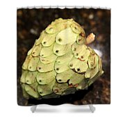 The Cherimoya Shower Curtain