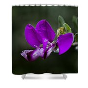 The Color Purple V2 Shower Curtain