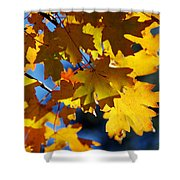 The Colors Of Autumn In Arizona  Shower Curtain