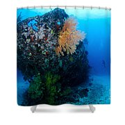The Coral Encrusted Stern Shower Curtain