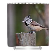 The Crested Tit Having Lunch Shower Curtain