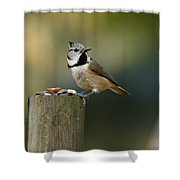 The Crested Tit Shower Curtain