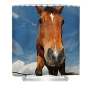 The Curious Horse Shower Curtain