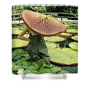 The Cut Pad Of A Victoria Amazonica Shower Curtain