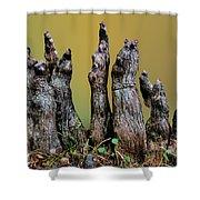 The Cypress Knees Chorus Shower Curtain