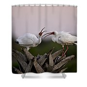 The Debate Shower Curtain by Rob Travis
