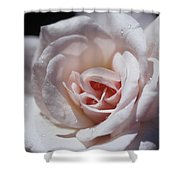 The Delicate Pale Pink Petals Shower Curtain