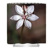 The Delicate Pastel Pink Flower Shower Curtain