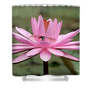 The Dragonfly And The Pink Water Lily Shower Curtain