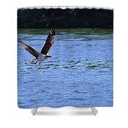The Environmentalist Osprey Shower Curtain