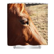 The Eye Of The Horse Shower Curtain by Robert Margetts