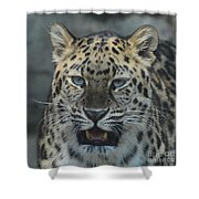 The Eyes Of A Jaguar Shower Curtain