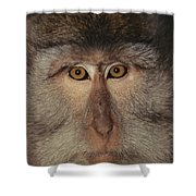 The Face Of A Long-tailed Macaque Shower Curtain