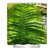 The Fern Shower Curtain