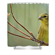 The Finch  Shower Curtain