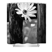 The Flower Bw Shower Curtain