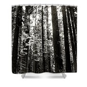 The Forest Through The Trees Shower Curtain