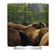 The Gathering At Ryerss Farm Shower Curtain