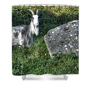 The Goat And The Stone Shower Curtain