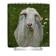 The Goat Shower Curtain