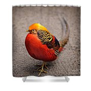 The Golden Pheasant Shower Curtain