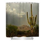 The Golden Saguaro  Shower Curtain