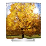 The Golden Tree Shower Curtain