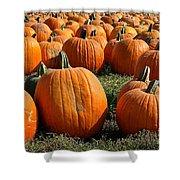 The Great Pumpkin Patch Shower Curtain